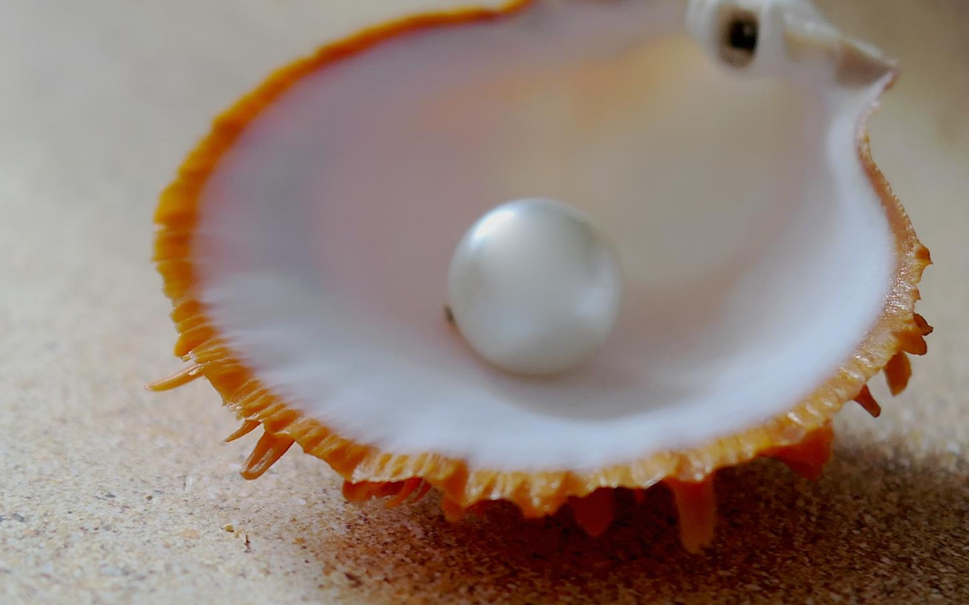 Wonders Of The Deep; The Pearl